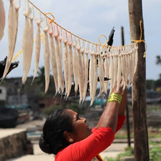 Koli woman hangs bombil for drying